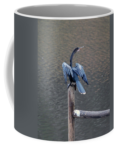 Bird Coffee Mug featuring the photograph Blue Darter by Robert Meanor