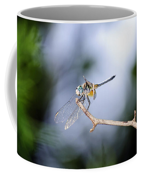 Dragonfly Coffee Mug featuring the photograph Blue Dasher Dragonfly by Kenneth Albin