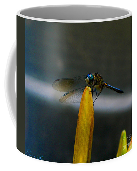 Dragonfly Coffee Mug featuring the photograph Blue Dhasher Dragonfly by September Stone