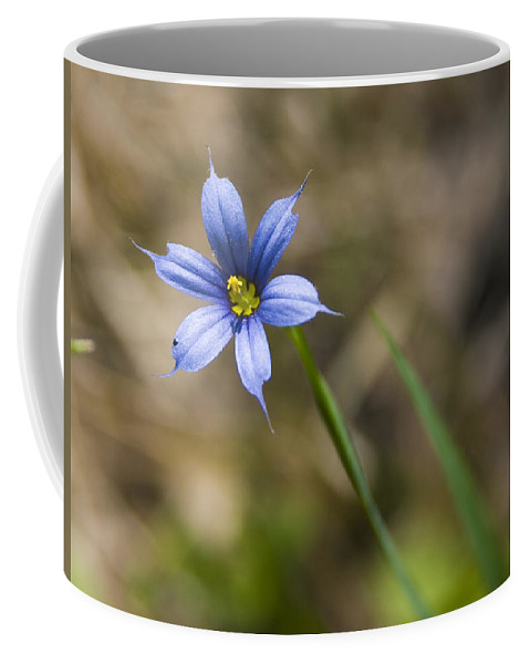 Flower Blue Grass Green Small Little Bright Color Colorful Yellow Flora Nature Coffee Mug featuring the photograph Blue-eyed Grass II by Andrei Shliakhau
