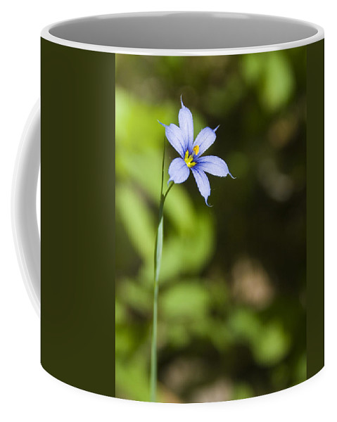 Blue Eye Grass Flower Nature Yellow Green Delicate Small Little Coffee Mug featuring the photograph Blue-eyed Grass IIi by Andrei Shliakhau