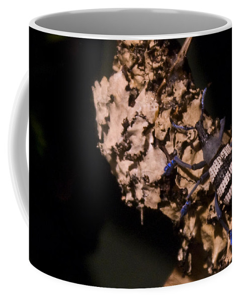 Blue Coffee Mug featuring the photograph Blue Footed Weevil by Douglas Barnett