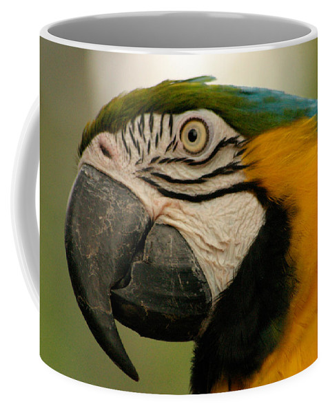 Parrot Coffee Mug featuring the photograph Blue Gold Macaw South America by Ralph A Ledergerber-Photography