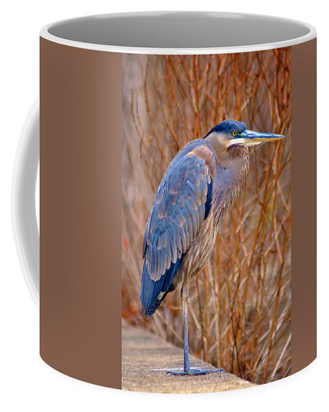 Manayunk Coffee Mug featuring the photograph Blue Heron by Bill Cannon