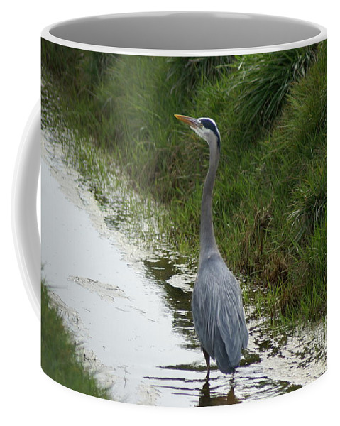 Heron Coffee Mug featuring the photograph Blue Heron by Louise Magno