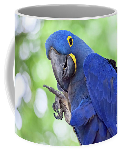Animal Coffee Mug featuring the photograph Blue Hyacinth Macaw by Leslie Banks