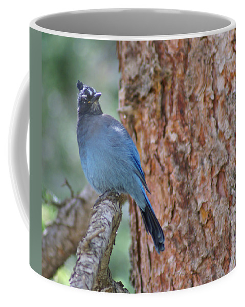 Blue Jay Coffee Mug featuring the photograph Blue Jay by Heather Coen