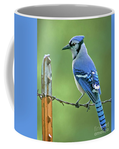 Animal Coffee Mug featuring the photograph Blue Jay On The Fence by Robert Frederick