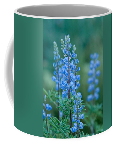 Grand Teton Coffee Mug featuring the photograph Blue Lupine In The Tetons by Sandra Bronstein