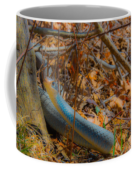 Blue Racer Coffee Mug featuring the photograph Blue Racer by Michael Tucker