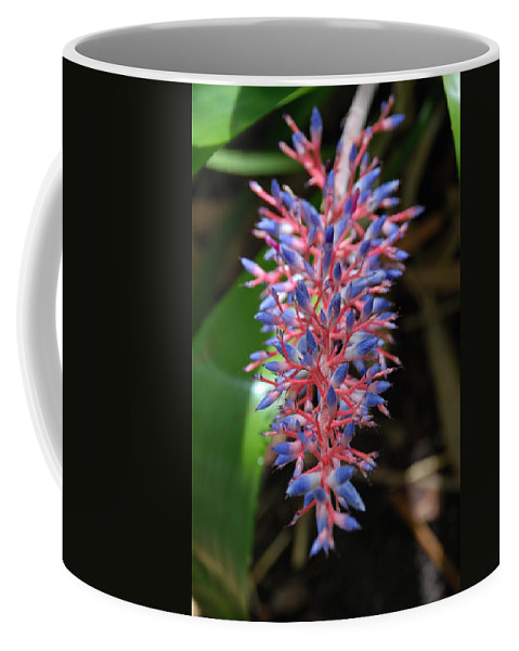 Red Coffee Mug featuring the photograph Blue Red Plant by Rob Hans