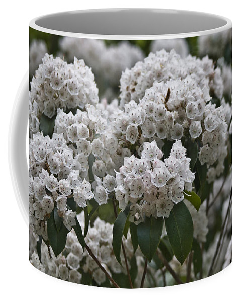 Kalmia Coffee Mug featuring the photograph Blue Ridge Mountain Laurel by Teresa Mucha
