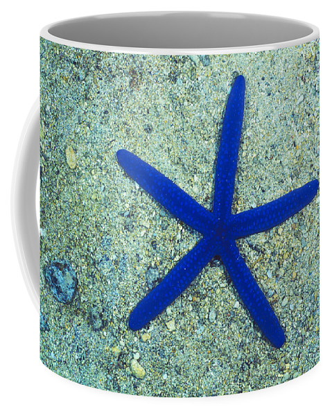 Fiji Coffee Mug featuring the photograph Blue Sea Star Or Starfish On Sand by James Forte