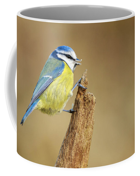 Animal Coffee Mug featuring the photograph Blue Tit Perched by Chris Smith
