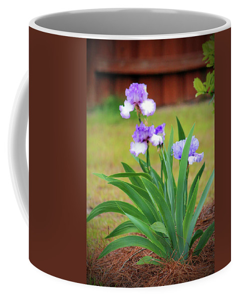 Iris Coffee Mug featuring the photograph Blue Violet Irises by Cynthia Guinn