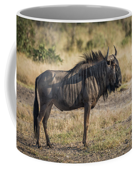 Africa Coffee Mug featuring the photograph Blue Wildebeest Standing On Savannah Staring Ahead by Ndp
