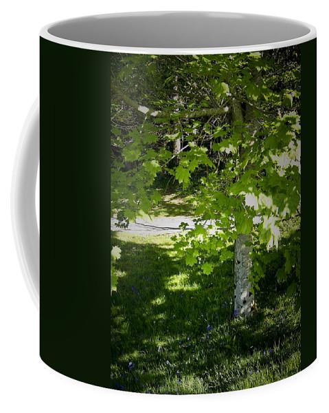 Irish Coffee Mug featuring the photograph Bluebells In Killarney National Park Ireland by Teresa Mucha