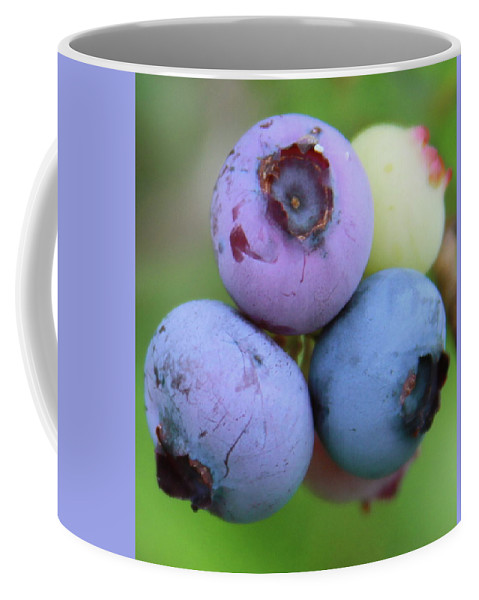 Blueberry Coffee Mug featuring the photograph Blueberries On The Vine 2 by Cathy Lindsey