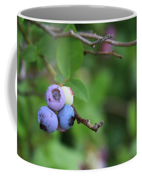 Blueberry Coffee Mug featuring the photograph Blueberries On The Vine 4 by Cathy Lindsey