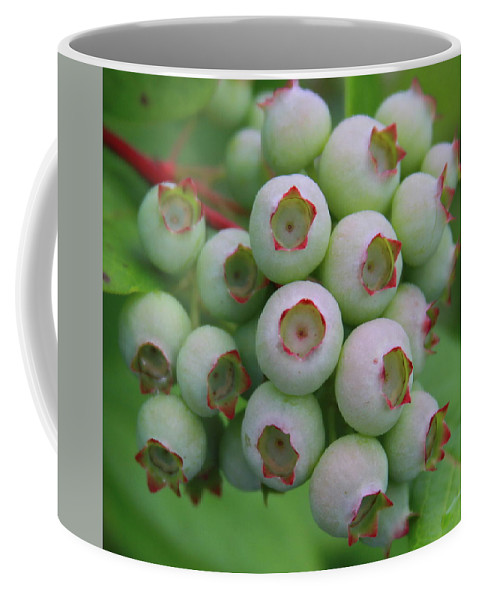 Blueberry Coffee Mug featuring the photograph Blueberries On The Vine 9 by Cathy Lindsey