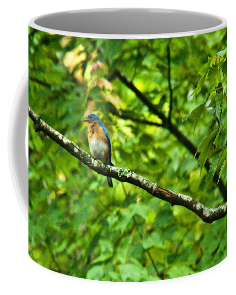 Cumberand Coffee Mug featuring the photograph Bluebird Looking About by Douglas Barnett