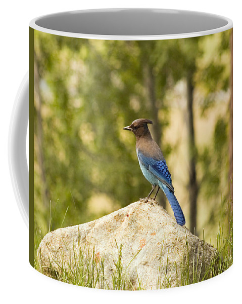 Bluejay Coffee Mug featuring the photograph Bluejay Pondering by Mick Burkey