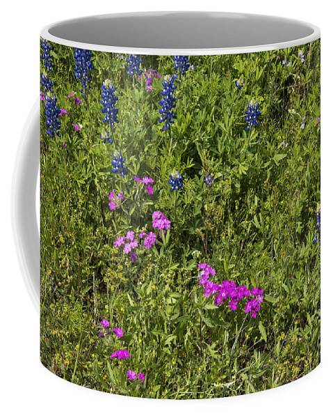 Fredericksburg Texas White Bluebonnet Bluebonnets Grass Grasses Bloom Blooms Flower Flowers Pink Phlox Hill Country Coffee Mug featuring the photograph Blues And Pinks by Bob Phillips
