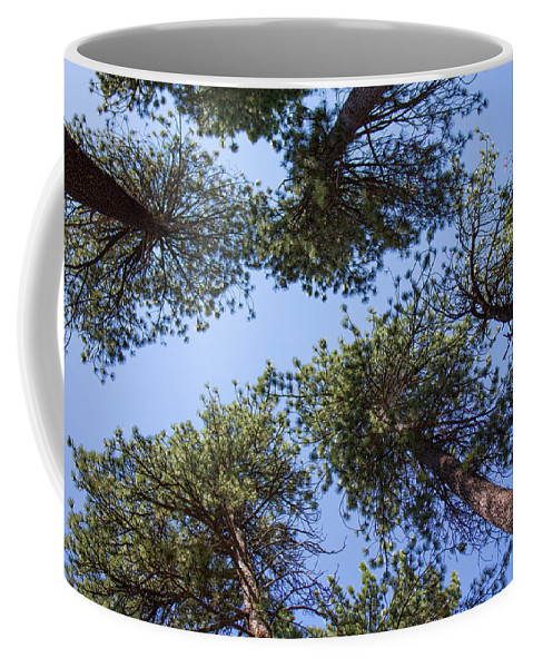 Landscape Coffee Mug featuring the photograph Bluff Lake Forest 2 by Chris Brannen