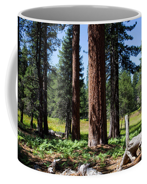Landscape Coffee Mug featuring the photograph Bluff Lake Forest 3 by Chris Brannen