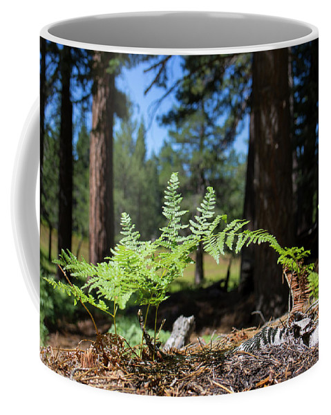 Landscape Coffee Mug featuring the photograph Bluff Lake Forest Foliage1 by Chris Brannen
