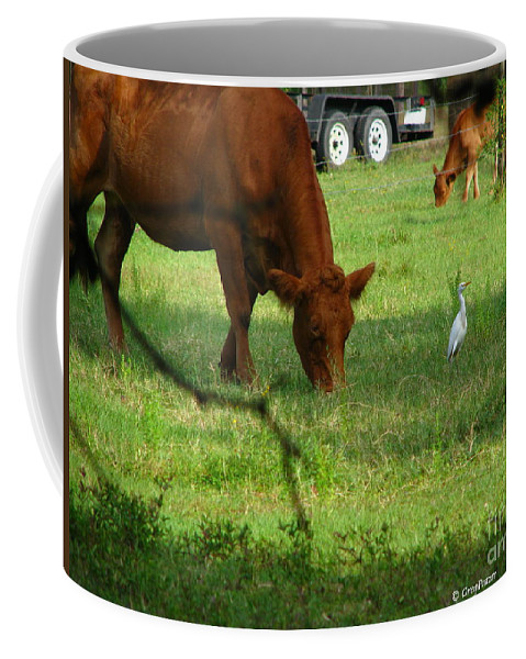 Cows Coffee Mug featuring the photograph Bodyguard by Greg Patzer