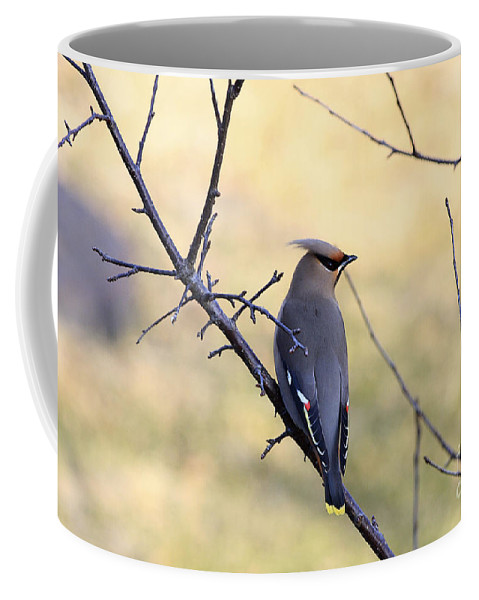 Waxwing Coffee Mug featuring the photograph Bohemian Cedar Waxwing In Spring by Deborah Benoit