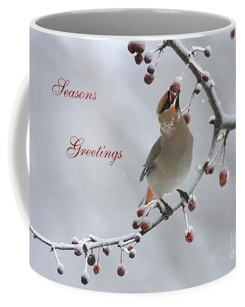Bohemiam Waxwing Coffee Mug featuring the photograph Bohemian Seasons Greetings by Deborah Benoit