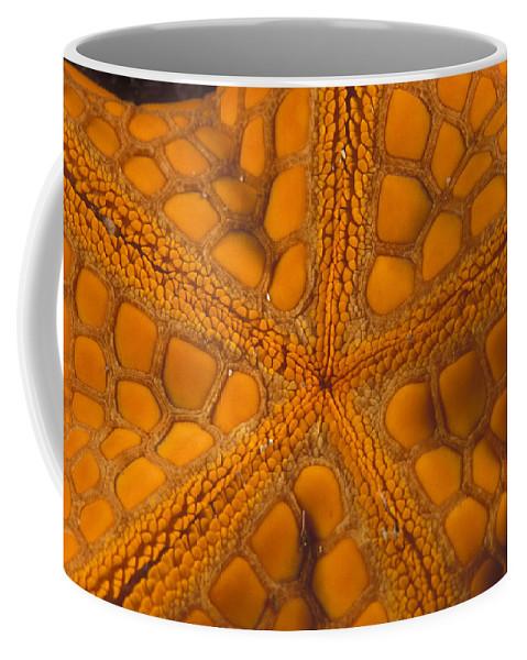 Sea Life Coffee Mug featuring the photograph Bottom Of Orange Sea Star Or Starfish by James Forte