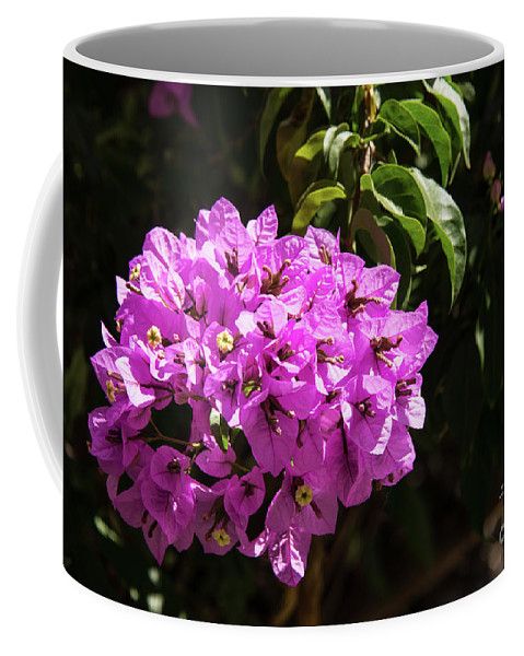 Burgazada Island Coffee Mug featuring the photograph Bougainvillea Bloom by Bob Phillips