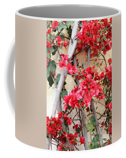 Bougainvilla Coffee Mug featuring the photograph Bougainvillea by Carol Groenen