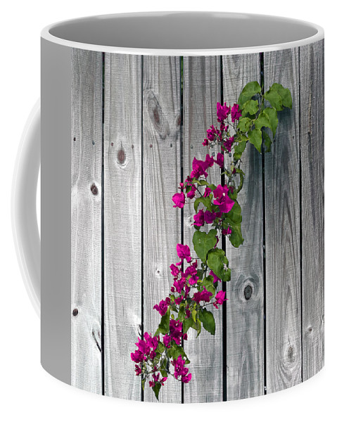 Flower Coffee Mug featuring the photograph Bougainvillea Glabra by Allan Hughes