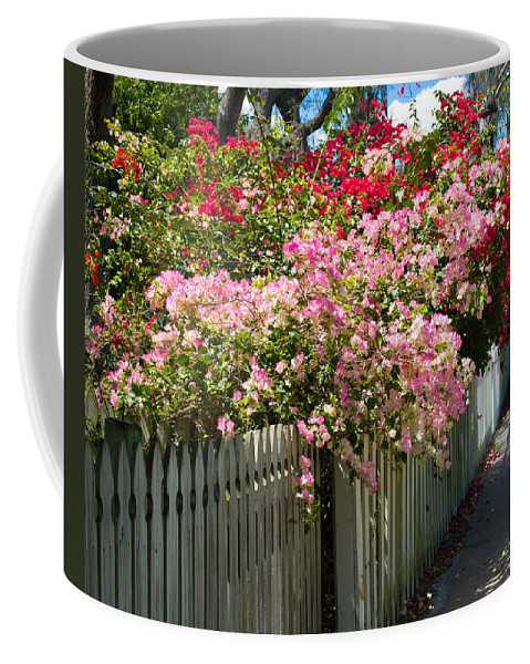 Nyctaginaceae; Bougainvillea; Flower; Flowers; Flowering; Bloom; Bloomimg; Blossom; Blossoming; Red; Coffee Mug featuring the photograph Bougainvillea In Old Eau Gallie Florida by Allan Hughes