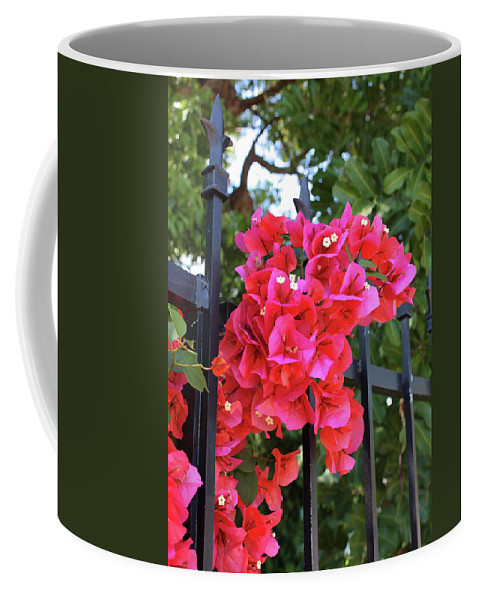 Bougainvillea Coffee Mug featuring the photograph Bougainvillea On Southern Fence by Carol Groenen