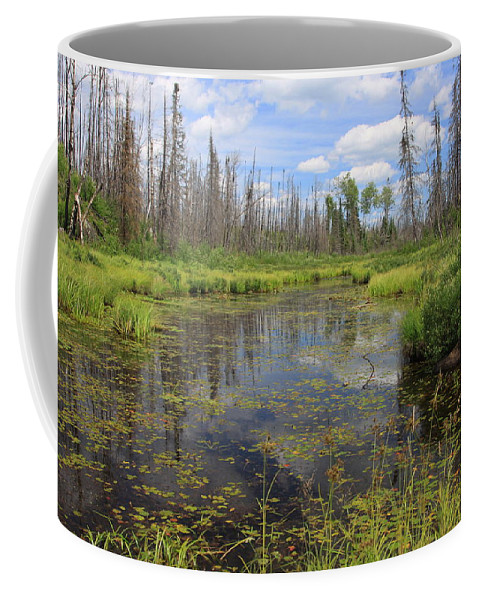 Boundary Waters Minnesota Lake Pond Swamp Nature Forest Park Lake Superior National Forest Coffee Mug featuring the photograph Boundary Waters Beauty by Shari Jardina