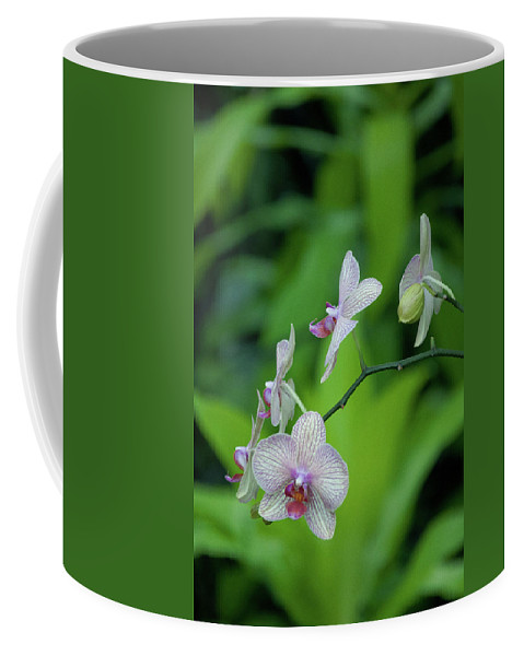 Green Coffee Mug featuring the photograph Bowersox by Trish Tritz