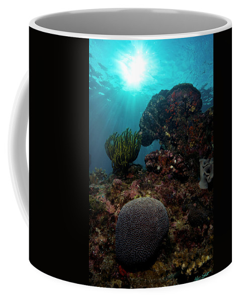 Solomons Coffee Mug featuring the photograph Brains And Crinoids by Mumbles and Grumbles