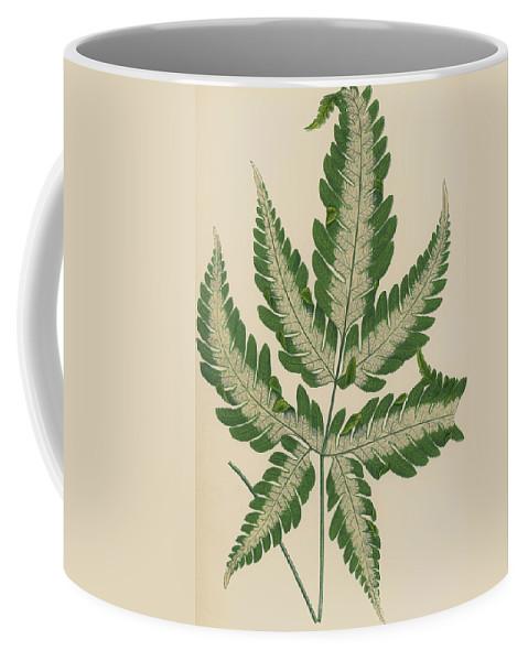 Fern Coffee Mug featuring the painting Brake Fern by English School