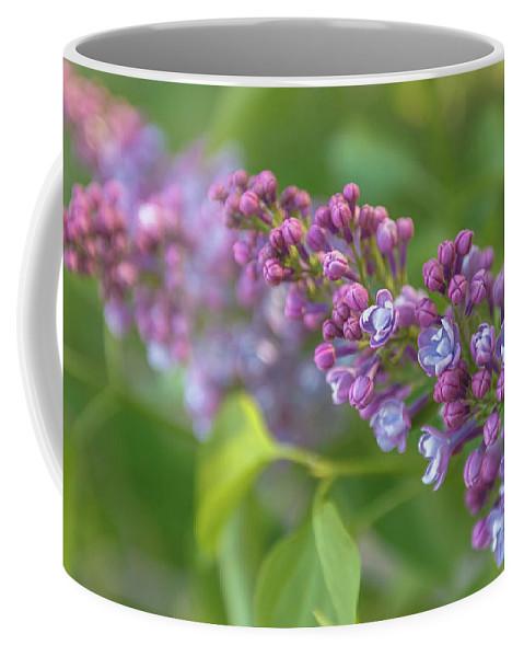 Anna Matveeva Coffee Mug featuring the photograph Branch Lilac by Anna Matveeva