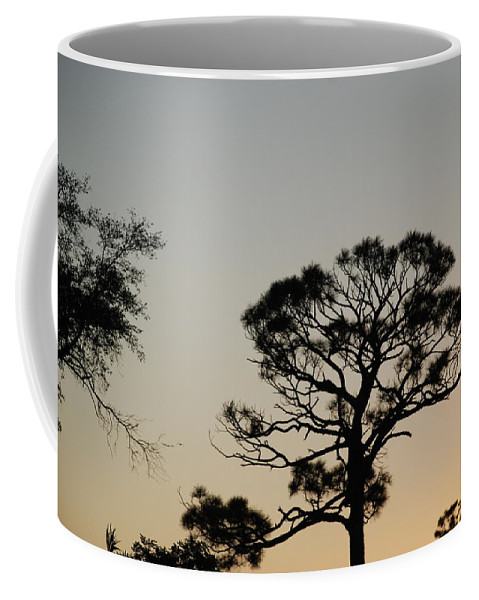 Tree Coffee Mug featuring the photograph Branches In The Sunset by Rob Hans