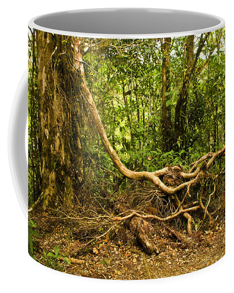 Tree Coffee Mug featuring the photograph Branching Out In Costa Rica by Madeline Ellis