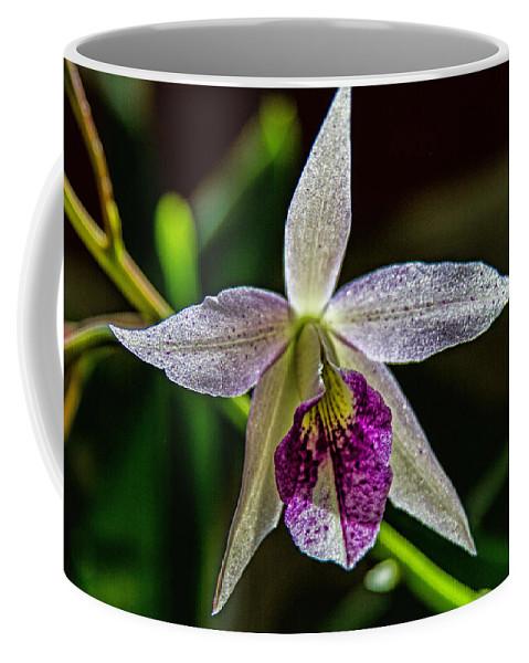 Botanical Coffee Mug featuring the photograph Brassocattleya Orchid by Alana Thrower