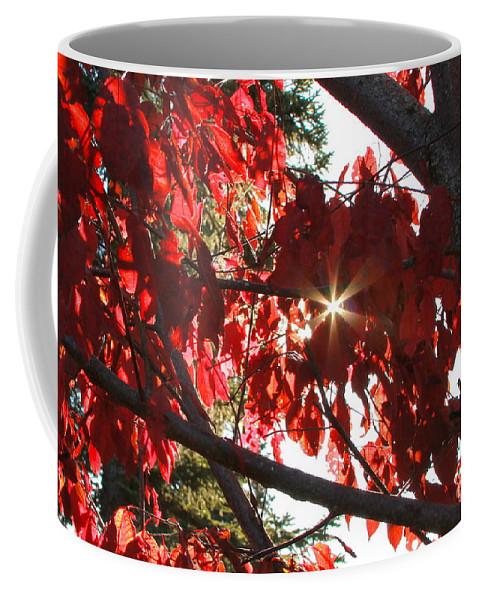 Tree Coffee Mug featuring the photograph Break Through by Rick Monyahan
