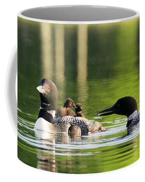 Loon Coffee Mug featuring the photograph Loon Mom Serves Breakfast In Bed by Jan Mulherin