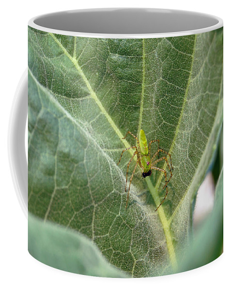 Spider Coffee Mug featuring the photograph Breakfast by Robert Meanor